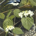 Black Throated Blue Warbler - SOLD