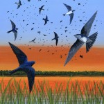 Purple Martin Painting